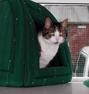 Cattery Sheffield, accomodation.